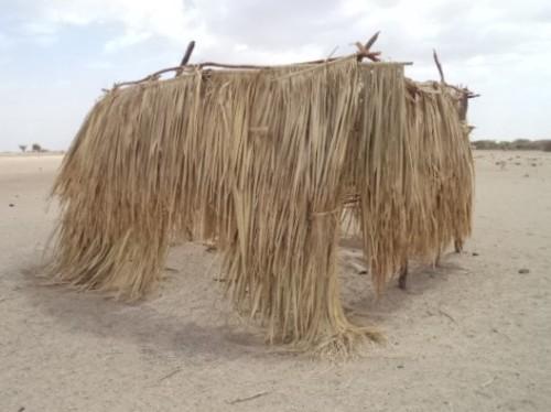 Kakimat latrine eaten by goats